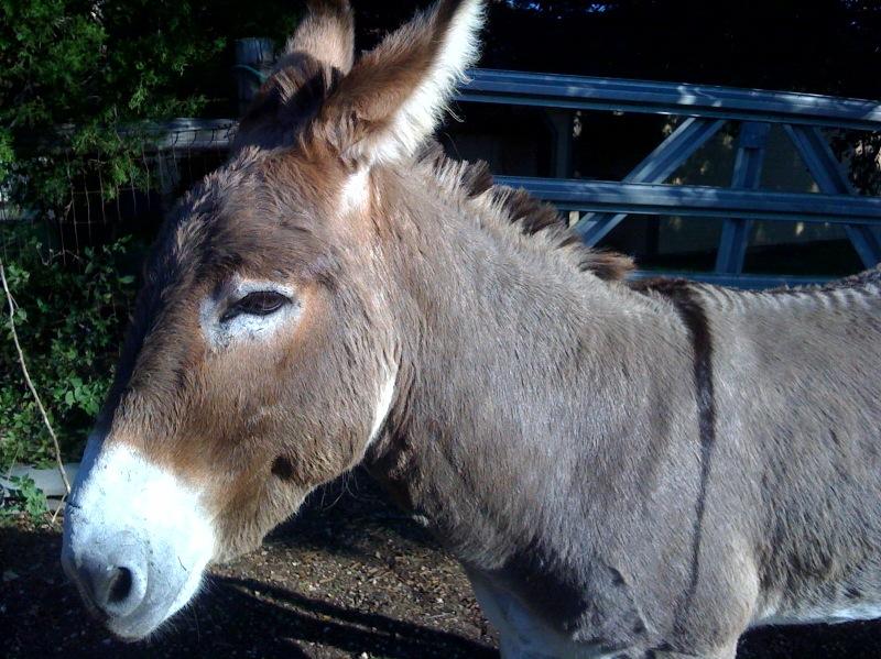 Home Sanctuary: Flash - Donkey Tales